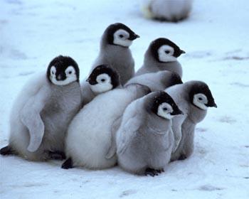 Google Penguin Update – какво е добре да знаем за него